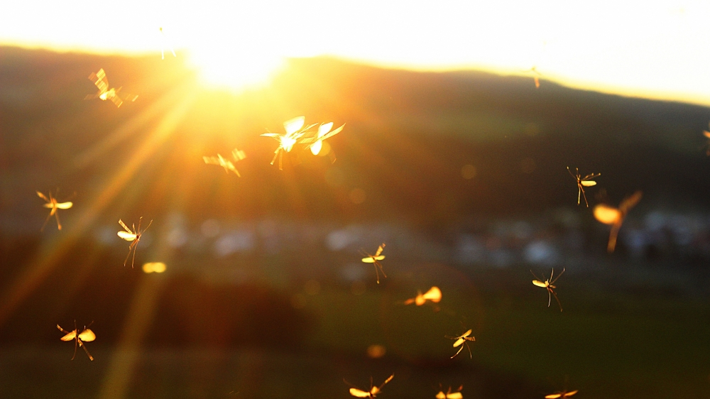 fly-silhouette-sunset-287310.jpg